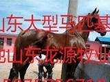 骑行马养殖基地在哪里