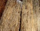 清远白蚁防治站 专业除白蚁杀虫灭蟑螂等害虫防治工作