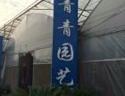 嘉兴平湖区绿植花卉/外送开业植物/开业发财树