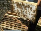 蜂巢蜜价格多少钱一斤,西安哪里有卖蜂巢蜜