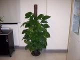 常州租花公司/租绿植 -植物出租,花卉租赁 绿植租摆