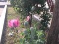东方花园,中装,83平米