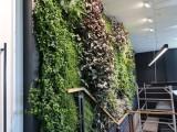 东莞植物墙室内植物背景墙设计制作施工公司