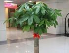 花卉租赁鲜花销售绿植租摆绿植养护中心