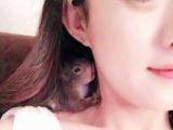 魔王松鼠幼崽出售,蜜袋鼯,迷你刺猬,飞鼠。