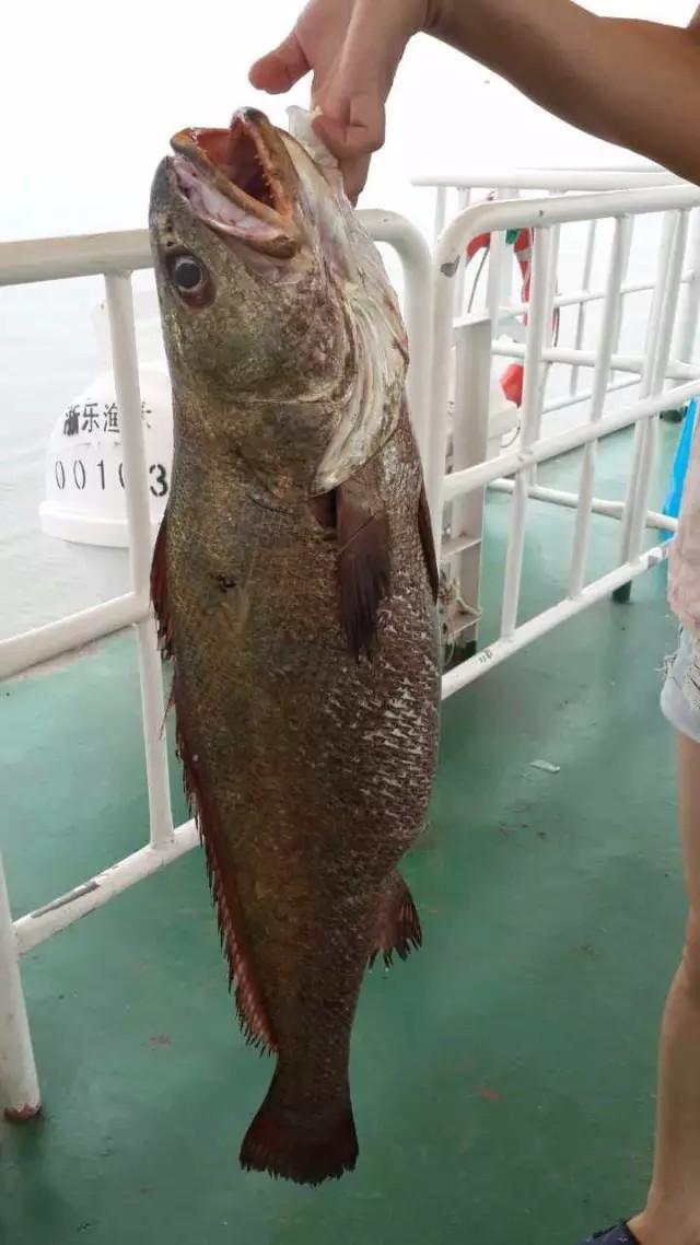 温州乐清包出海捕鱼,泛舟碧海 挥洒汗水 享受鱼虾满仓的喜悦