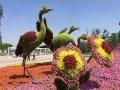 绿雕制作出售绿植造型设计租赁绿雕展览展示