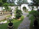 上海办公室绿植租赁 租摆