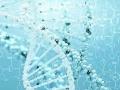 上海龙基因全国代理招商加盟