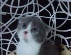 各种宝宝猫猫找新家啦
