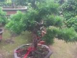上海室内外花木植物租摆