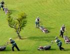 房山绿化队 承接路段绿化 公园绿化 园林绿化 养护