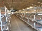层叠式肉鸡笼 养殖自动上料养鸡设备