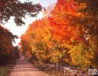 仙台山什么时候较好玩 仙台山赏红叶一日游