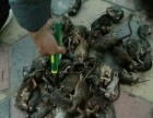 专业提供灭蟑螂、灭老鼠、灭蚊蝇等的防治