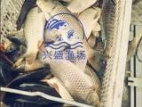 晋州市今年草鱼什么价格 观赏鱼什么价格