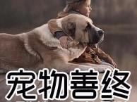 全国宠物火化 狗狗火化 宠物安葬 狗狗死了怎么办