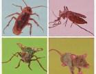 重慶專業滅蟲 重慶白蟻治理 重慶酒店滅白蟻
