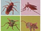 威海办公室 灭白蚁 威海灭跳蚤公司 威海控虫公司