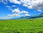 大美新疆北疆喀伊环线观光游列6晚7天深度游