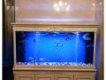 泰州大型鱼缸定做办公室隔断客厅水族箱