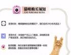 自家猫舍繁育精品布偶猫宠物级繁育级赛级花色齐全