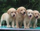 东莞诚信狗场促销,优惠多多,什么狗都有,包纯种健康