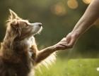西北旺专业上门遛狗,代喂猫狗