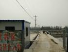 大唐锦鲤常年出售高中低档锦鲤 品种全 价格低