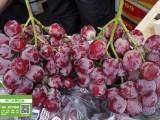 进口水果批发 秘鲁红提 红地球葡萄 广州江南水果批发市场