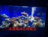 广州暖场海洋生物展主题节-高端海洋展活动方案-洋清海洋展租赁