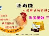 鸡得了肠道病 小肠球虫症状的治疗