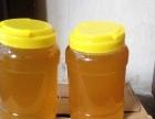 常年销售农家纯正土蜂蜜