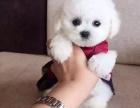 杭州哪里有卖泰迪的 泰迪多少钱一只