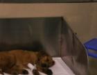 宠物店连锁加盟:宠物疾病防御 服务周到 安全可靠