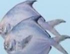 冲浪水产品 冲浪水产品加盟招商