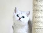 自家繁育精品各种品种猫咪血统纯正健康疫苗驱虫齐全safaf