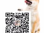 柯基犬价格 纯种柯基多少钱一只 华昇狗场直销柯基犬