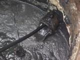 青县下水管道疏通化粪池清理市政管道清淤清洗