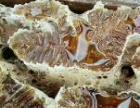 新疆伊犁蜂蜜王浆蜂巢蜜养蜂场自产自销假一赔十