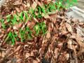 阳泉废电缆回收红铜黄铜铝线回收