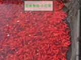 小红草-鱼食现货