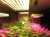 呼和浩特植物生长灯厂家专业供应植物生长灯
