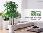 花市直销 大量绿植盆栽批发出售室内绿植租摆免费配送