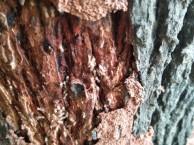 双峰公共区域消杀 灭鼠 灭蟑螂 灭白蚁 等