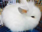 一对萌萌哒宠物兔出售