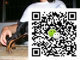 哪里有卖宠物狗狗杜宾幼犬 哪里能买到纯种杜宾小狗 杜宾犬多少