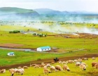 呼伦贝尔旅游攻略全境向导草原萨日朗