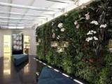 环保植物墙加盟