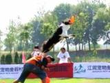 北京宠物训练人性化训练免费寄养